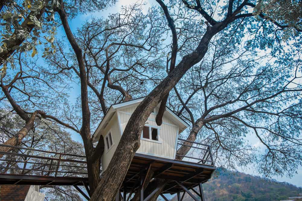 Small white treehouse built high up in large tree with suspended walkway.