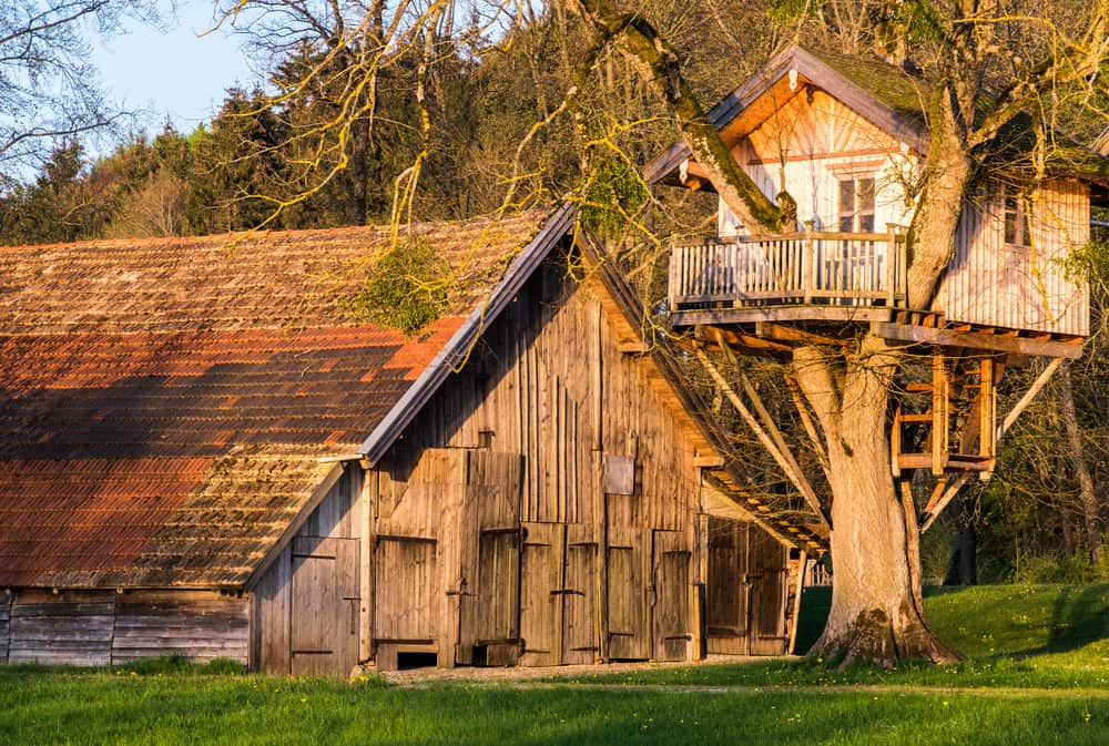 Professionally built treehouse with front deck and gabled roof in large multi-branched tree next to a barn.