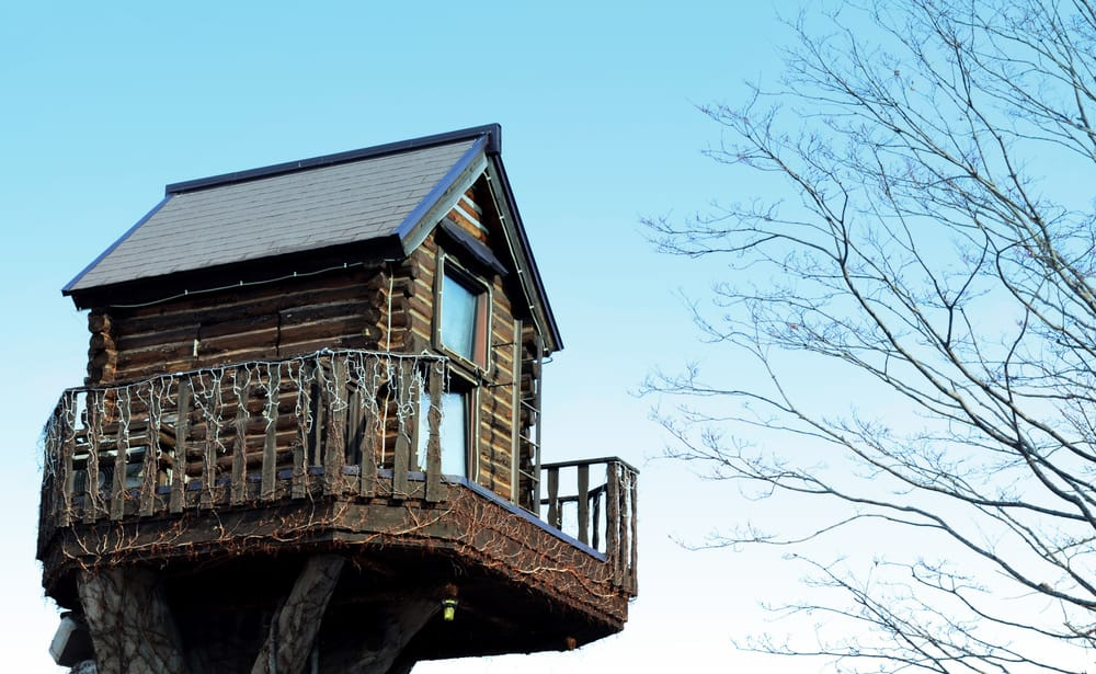 Treehouse perched on top of tree trunk.