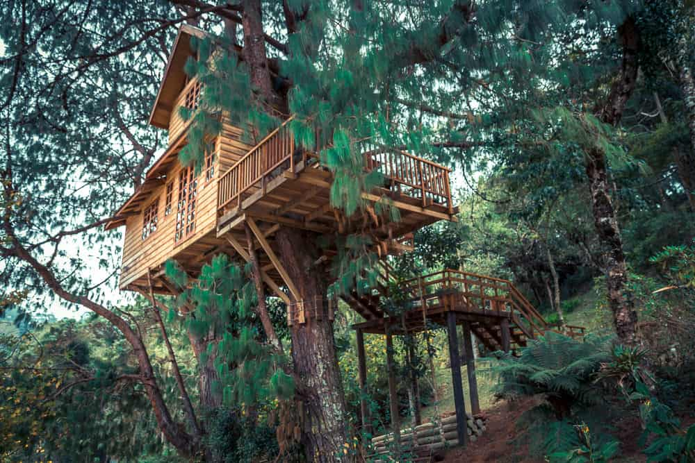 Large treehouse built up in tree with lots of foliage. This is a truly beautiful, professionally built treehouse.