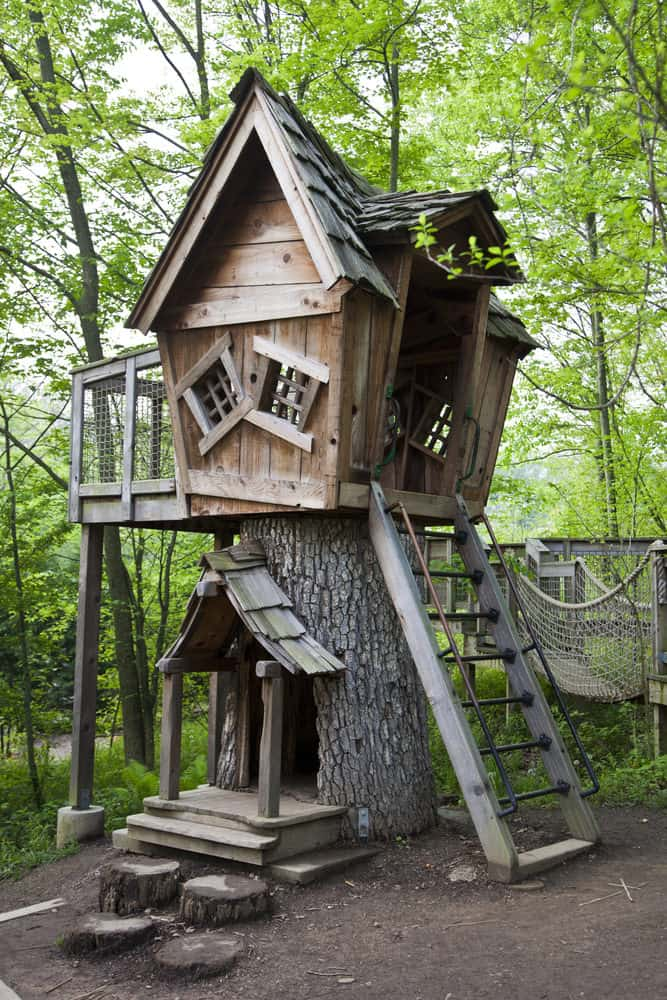 Very interesting crooked treehouse with interior space in the trunk of the tree.
