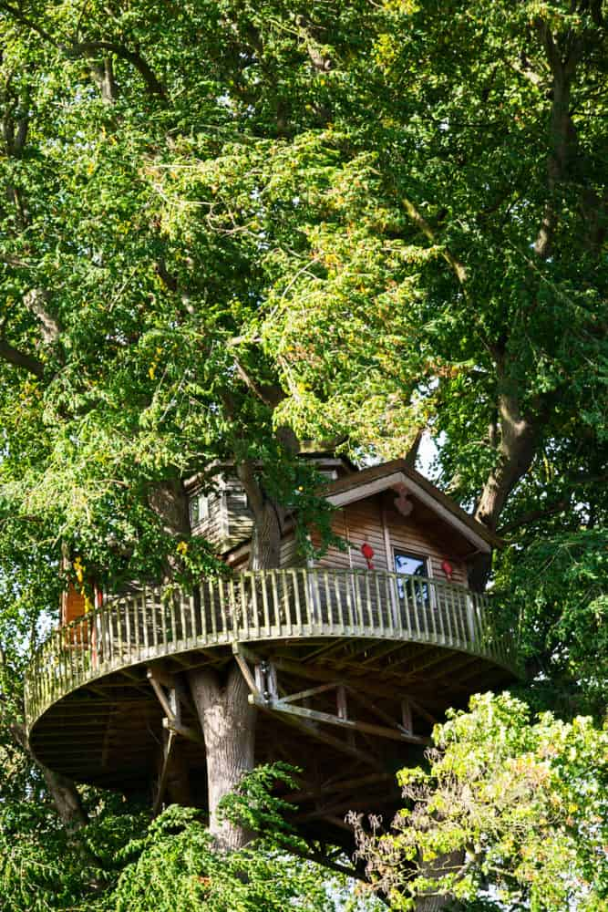 Large treehouse in large tree with round deck.