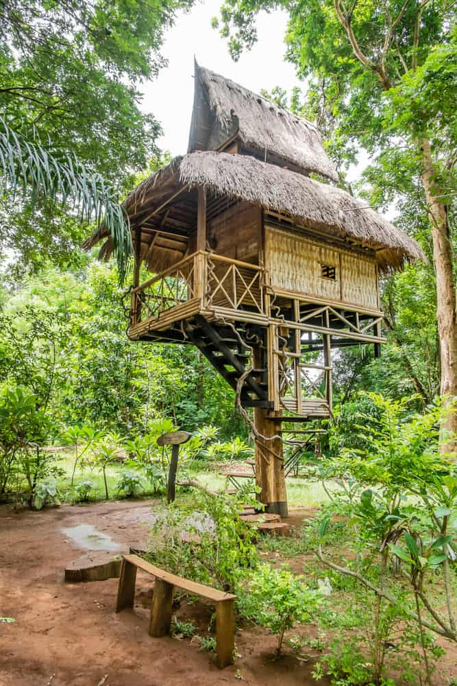 Tropical treehouse with thatch roof and porch perched precariously on stilt-like tree.