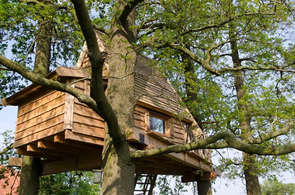 Custom built treehouse with real windows.