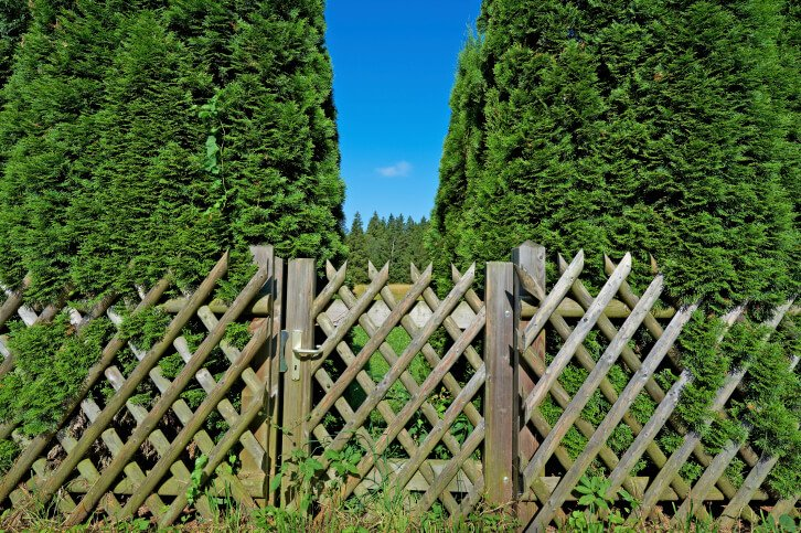 Rounded post lattice fence design here features rustic look, with latching gate at center.