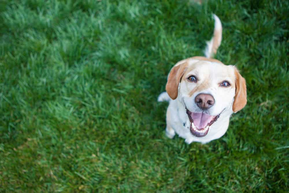 Cute dog playing in the backyard