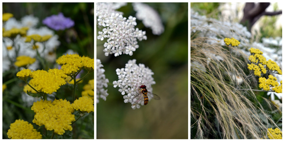 A series of closeups of the flora present in the sections of walkways.