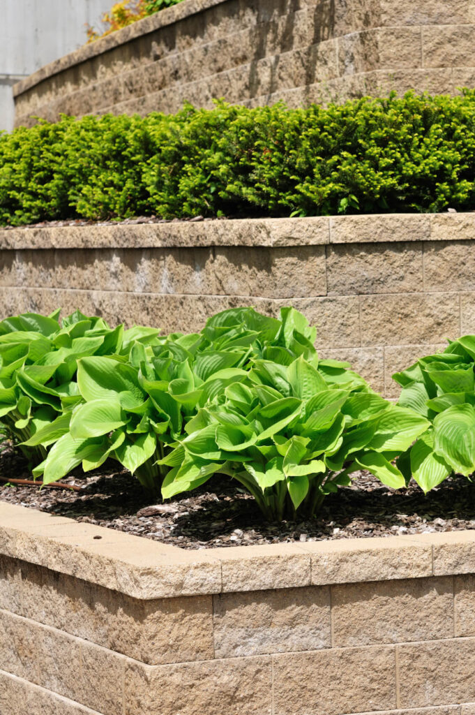 Beautifully fashioned retaining walls, each with a different plant in large groups.