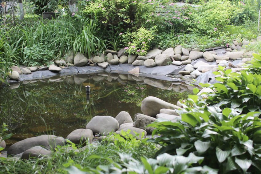 A simple garden pond with a center fountain. The simple liner is held down solidly by large stones. The pond is surrounded by thick, lush grasses and bushes.