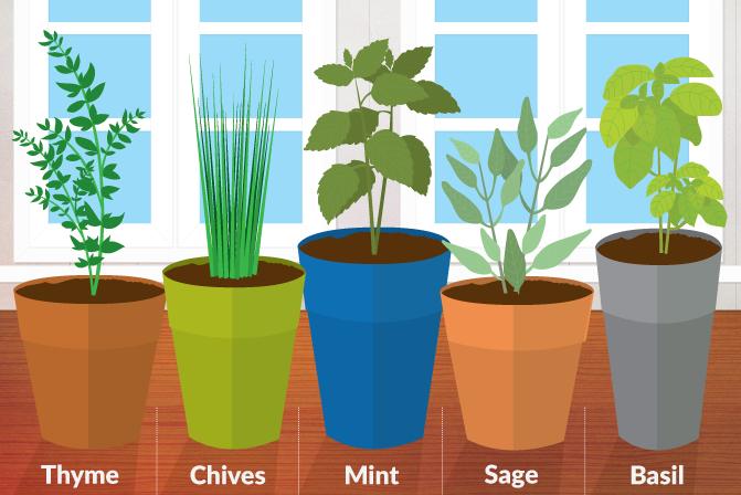 5 Best Herbs for a Kitchen Herb Garden