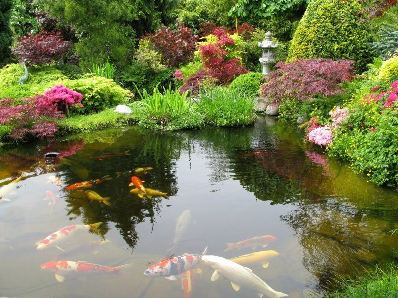 An enormous water feature in a Japanese garden filled with bold Japanese maple trees, flowering bushes, and thick grasses. A stone lantern and a stone statue of an egret can be seen in the background. The pond itself is populated by many large koi fish.