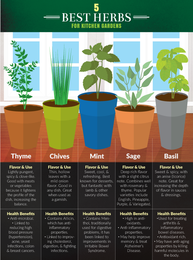The 5 best herbs for your garden.