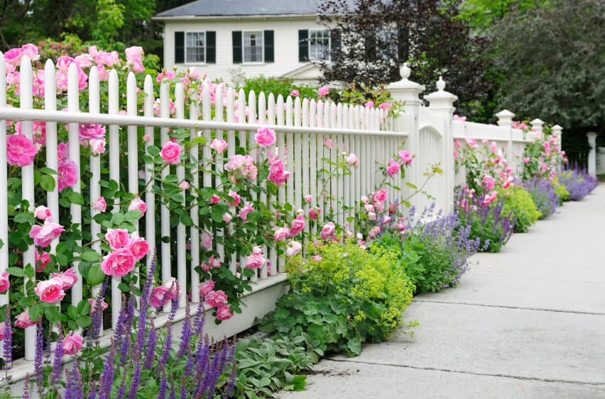 A view from the opposite side of the fence, showing the other plants and flowers along the edge.