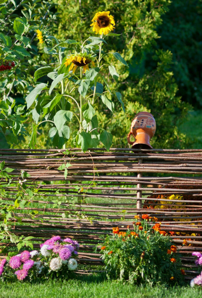 A fence made of springy, thin branches with vines and marigolds in front of and behind.