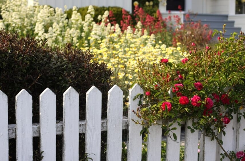A grand garden full of blooming flowers surrounded by a whitewashed picket fence.