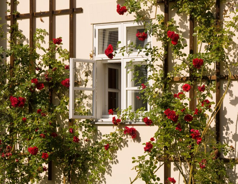 Wood trellis and climbing roses surround an open window. Simple, rustic, and classic.