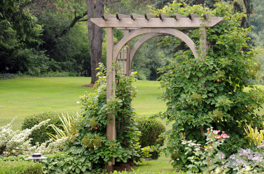 An arched, wooden trellis is being taken over by morning glories and other blooms.