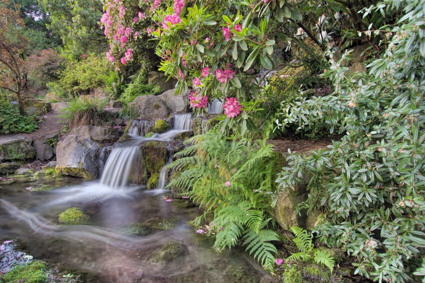 A tropical garden waterfall with a dirt pathway alongside it. Flowering trees, ferns, and lush flora cover any man-made elements.
