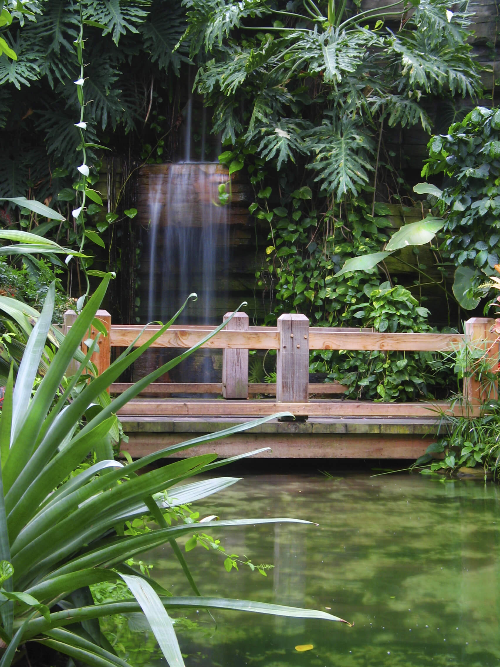 A tranquil natural wood bridge crossing an algae-filled pond with a sheer waterfall behind it. Large leafed plants and vines trail down from the rocks.