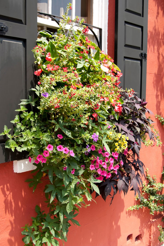 A home with wrought iron window boxes filled with petunias, vines, and other small bloom flowers. The arrangement covers the bottom half of the window.