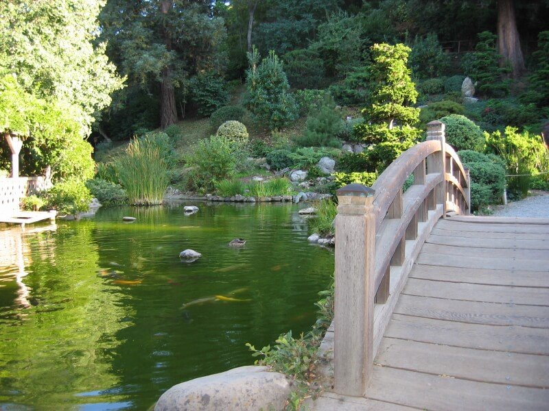 A Japanese garden bridge arcing over a koi pond with a light green hue. Water fowl are visible on the surface.