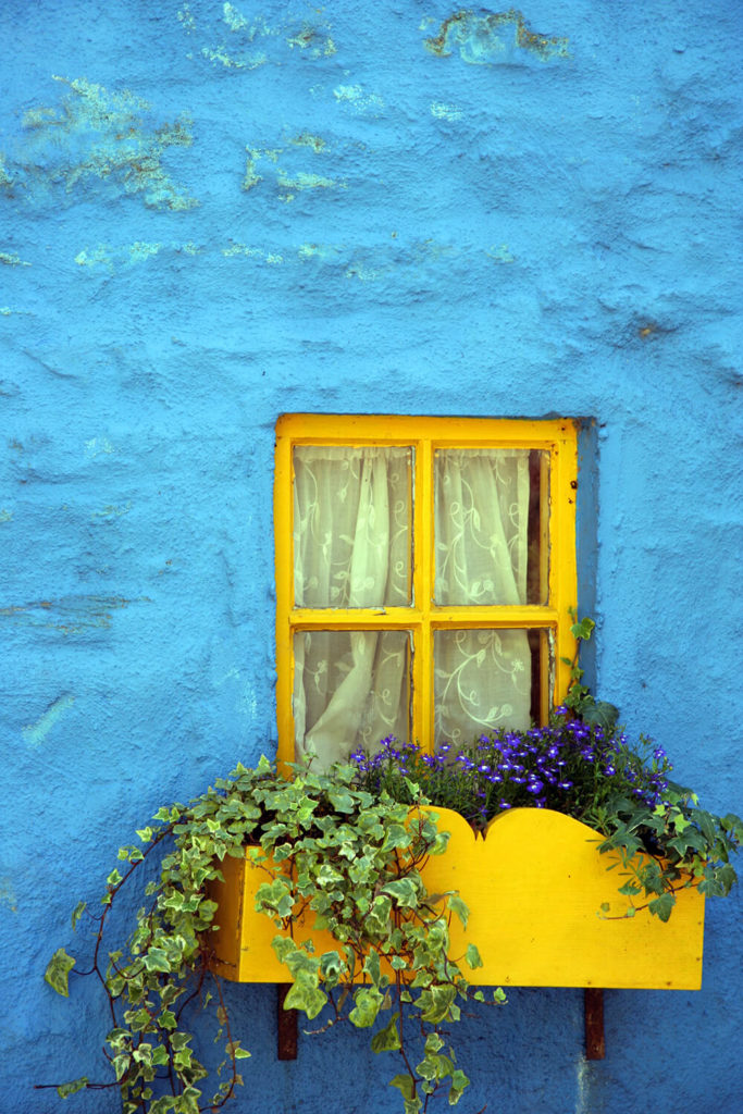 A canary yellow curved window box affixed to the bold blue plaster facade. Small purple flowers and two kinds of ivy populate this already bold piece.