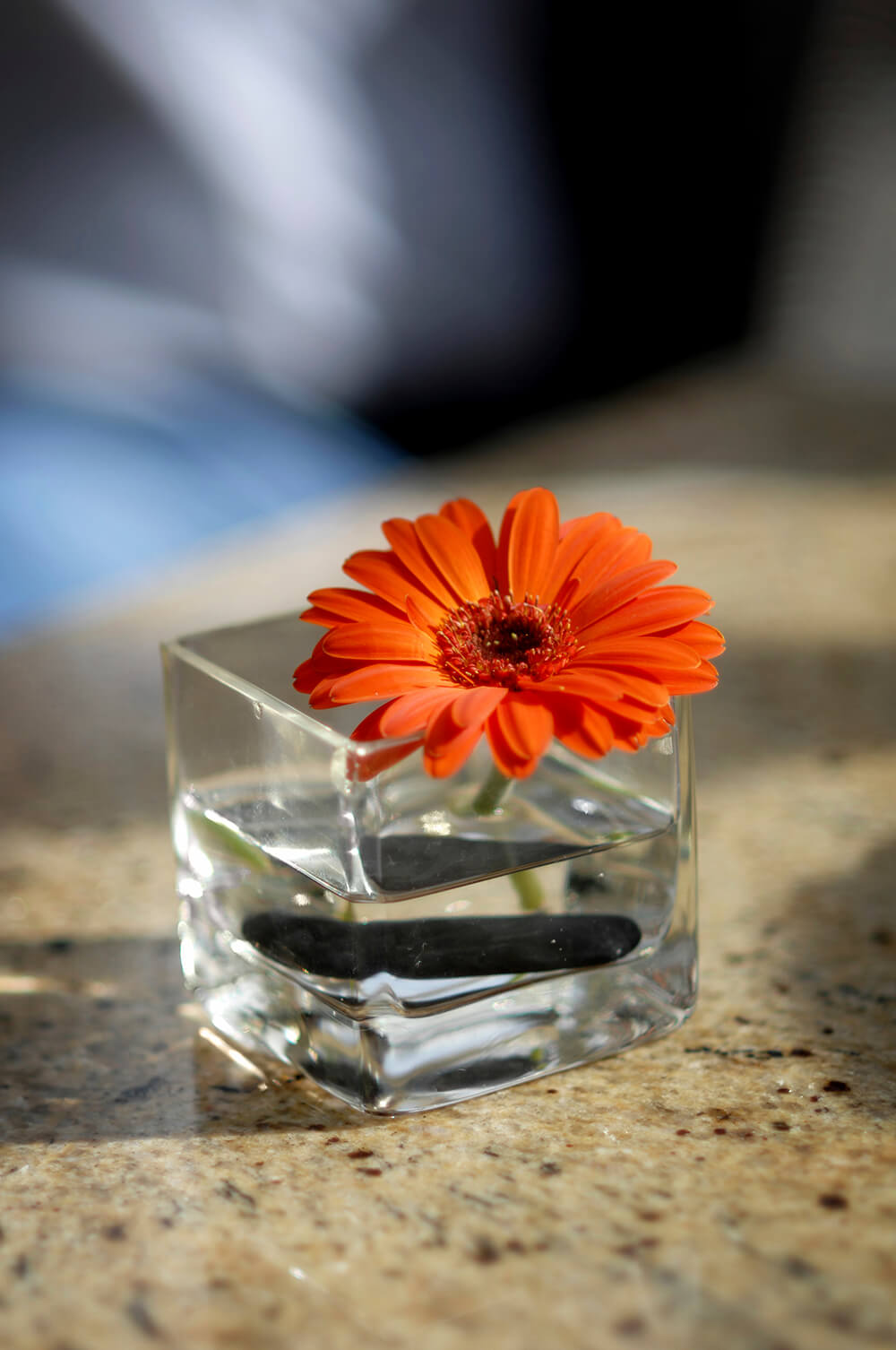An incredibly simple, small square vase with a black twig at the bottom and a bright orange gerbera peeping over the edge.