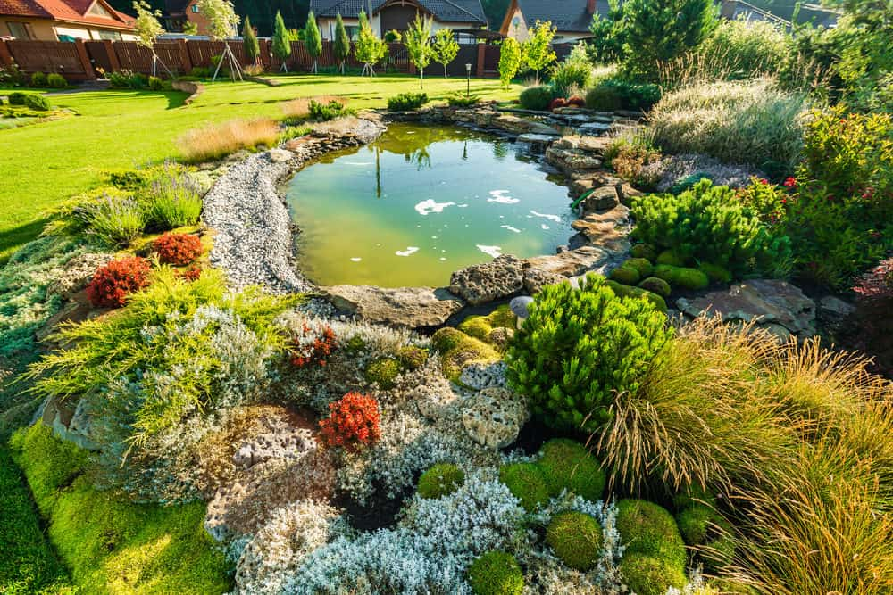 Oh, how I love all the colors around this pond! A bit of everything: some red foliage, blue flowers and lots of green lush grasses. Lovely setting!