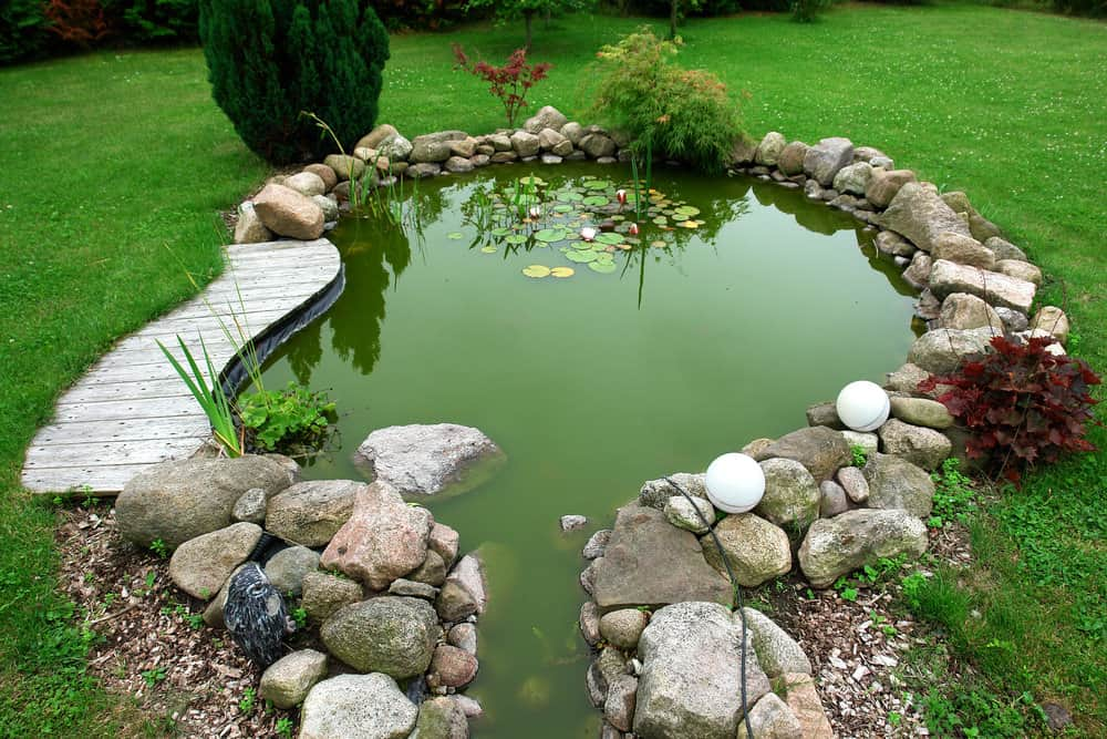 Small backyard pond surrounded by uneven rocks, is a great place for children to have some fun. Small, yet so pretty!
