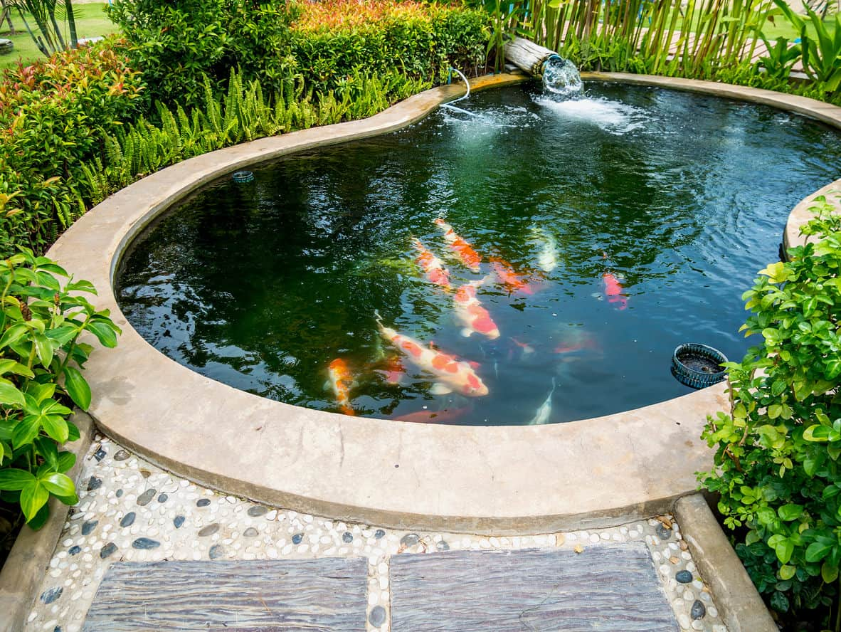 60 backyard pond ideas photos for Small pond filter design