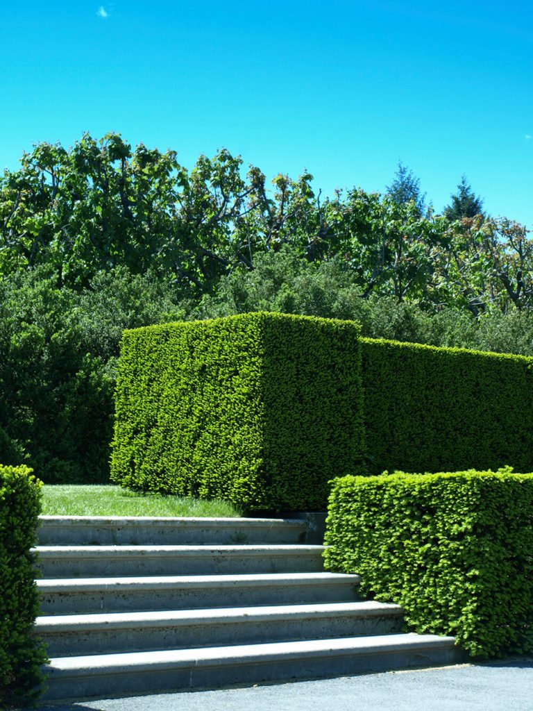 The structured cubes of these hedges add a rigid uniformity to this yard that mimics the stone steps they surround.