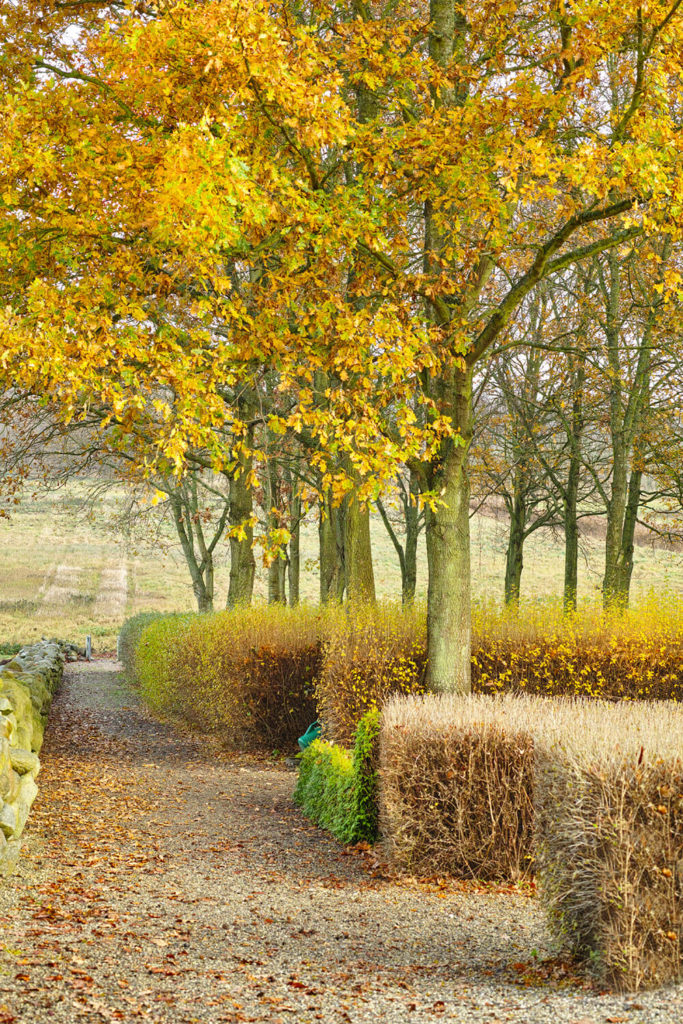 Even hedges are beautiful in the autumn. Despite the loss of leaves, keeping hedges shaped can still add interest to a garden and achieve the desired look of a hedge.