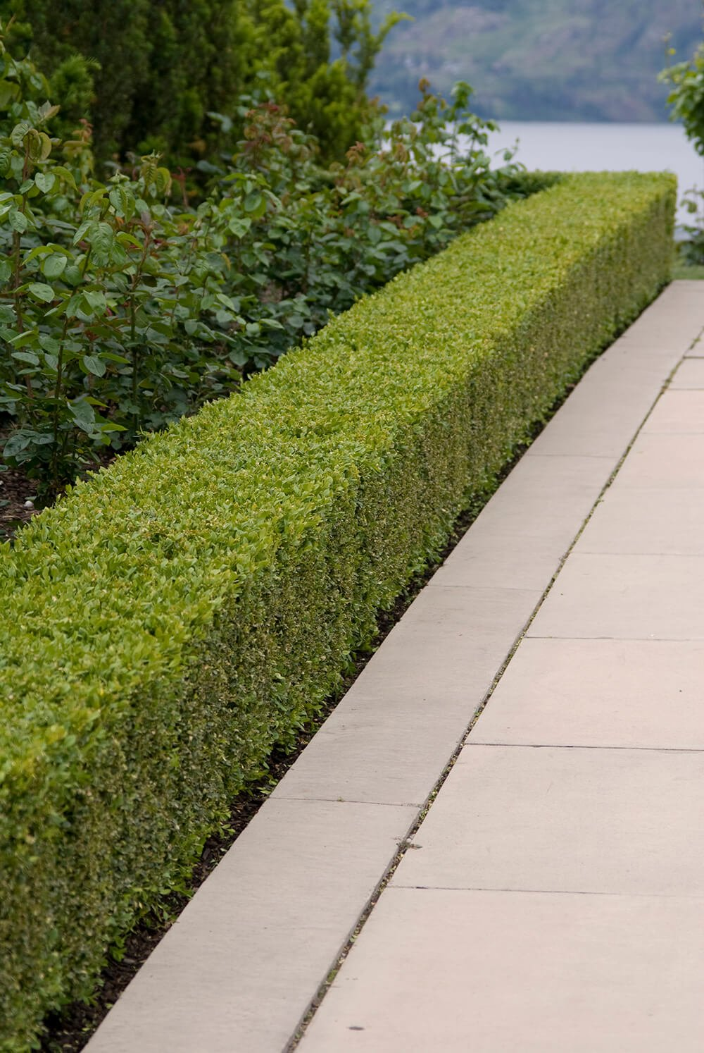 The straight lines of this path and bordering hedge create an ordered sense of calm and balance each other well.