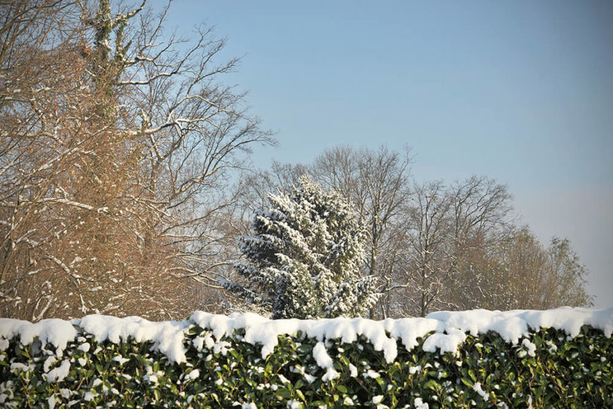 This snow-covered hedge is a beautiful addition to any winter yard. Picking a hedge that will keep its leaves year-round can ensure a touch of green even in the depths of the winter months.