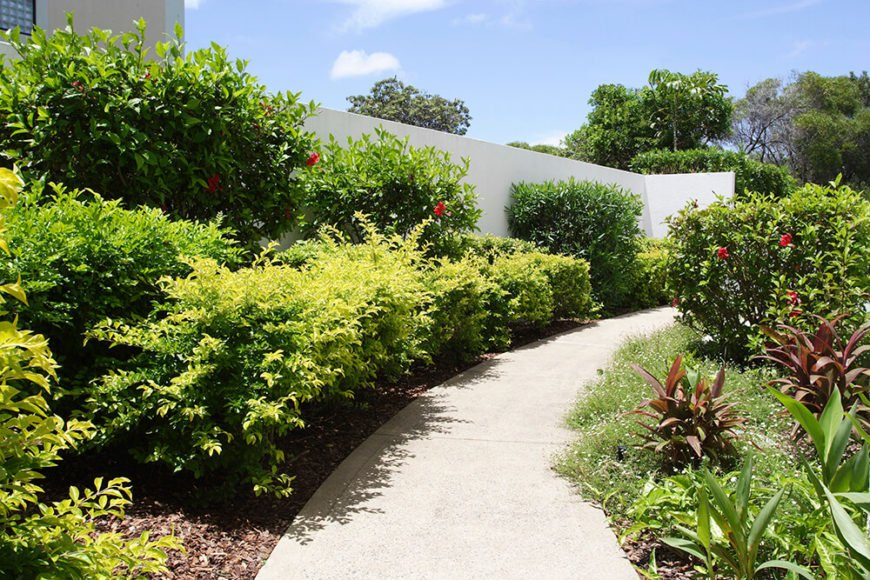 These leafy hedges stand out against the white wall they border. The leafiness matches the shapes of the other smaller plants, tying the entire garden together.