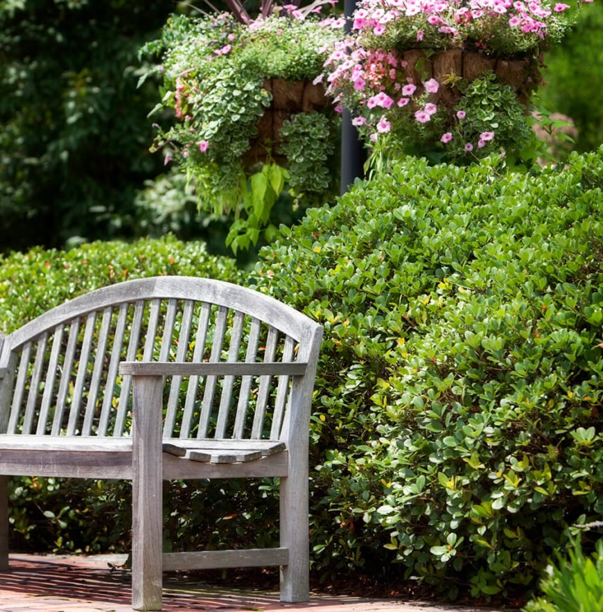 These hedges create a softly flowing border around this patio adding a sense of privacy to the relaxing spot.