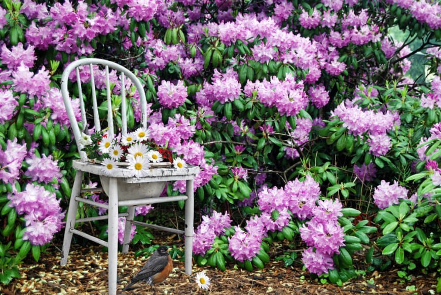 Old chairs can add style to any garden design. Cutting out the seat to fit a flower pot is an interesting, and simple, idea.
