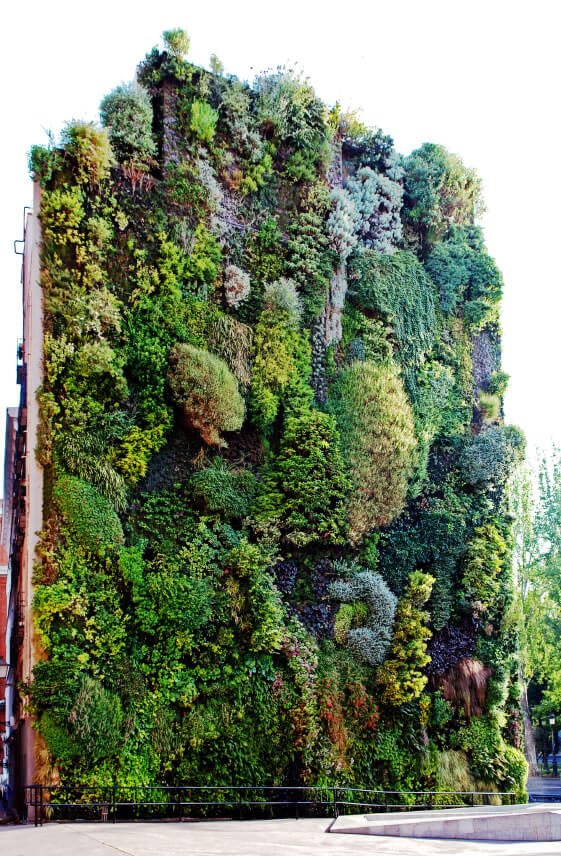 While providing aesthetic beauty and keeping us within eye-shot of the natural world, people often forget that green walls provide habitat for birds and insects - all while helping to purify the outside air.