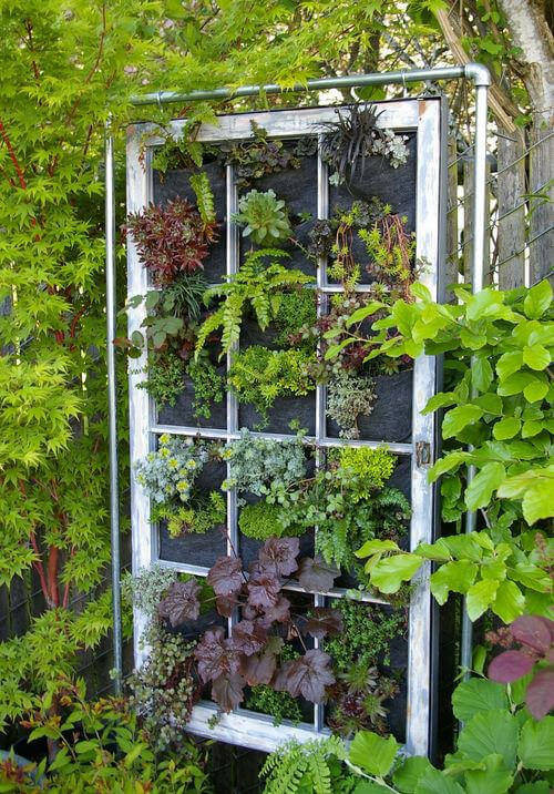 Wall gardens are not limited to solid, flat structures. Breathe new life into those old window frames. Using existing screening, or installing a felt covering, eventually your plants will grow out beyond the window frame.