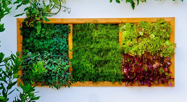5fl-vertical-garden Vertical plants, like those in the above garden boxes, make excellent use of space while providing a blast of color and style.