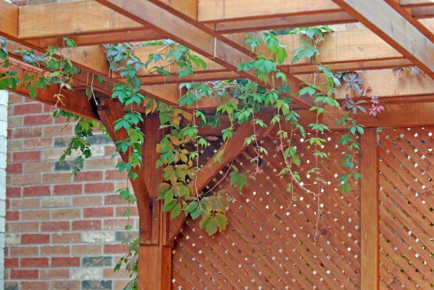 Lovely cedar trellis privacy screen.