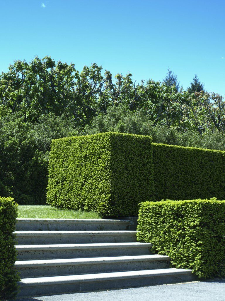 These meticulously trimmed hedges are perfectly level and follow the stairs down to the sidewalk.