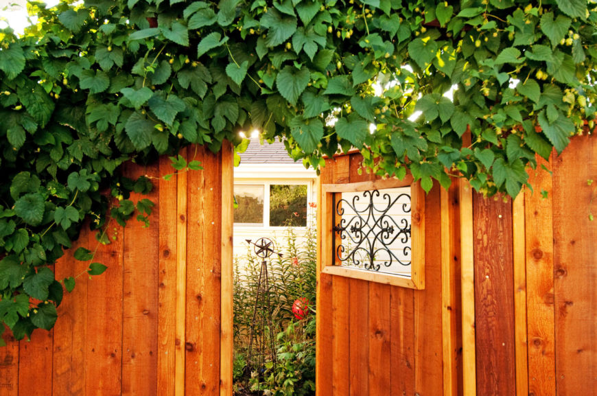 Vines cover the top of this detailed fence with intricate gate.