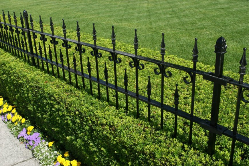 A beautiful wrought iron fence in black with a manicured hedge growing beneath and a small bed of flowers nearest to the sidewalk.