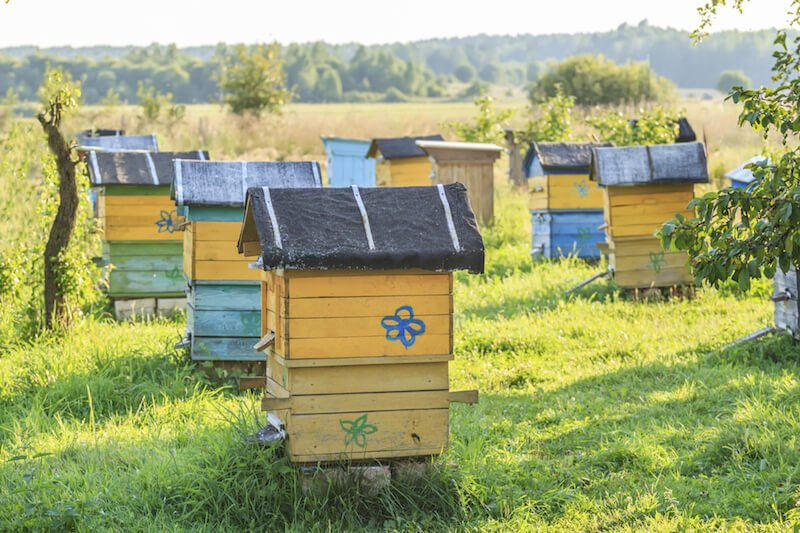 These bold yellow, blue, and green hives are decorated with painted flowers to spruce them up, and located in a field far from the suburbs.