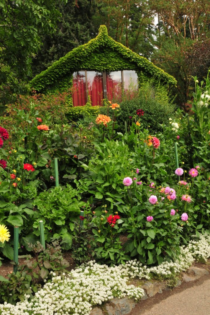 Train climbing plants like ivy, morning glory, or roses to envelop your shed in greenery.