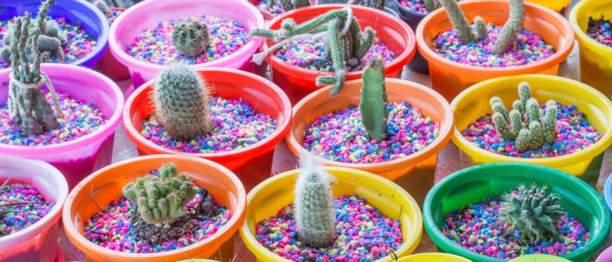 Adding some color to a cactus garden is easy. With some colored stone and planters, you can turn a standard cactus garden into a festive and visually interesting cactus party.