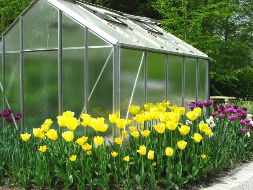 Here is a greenhouse in the midst of a bed of flowers. While it gives more space and time for growing the flowers, you cant really see what is growing inside. Not to worry, the plants that you get the early start on can easily be moved out to the flowerbed when the outside conditions become ideal.