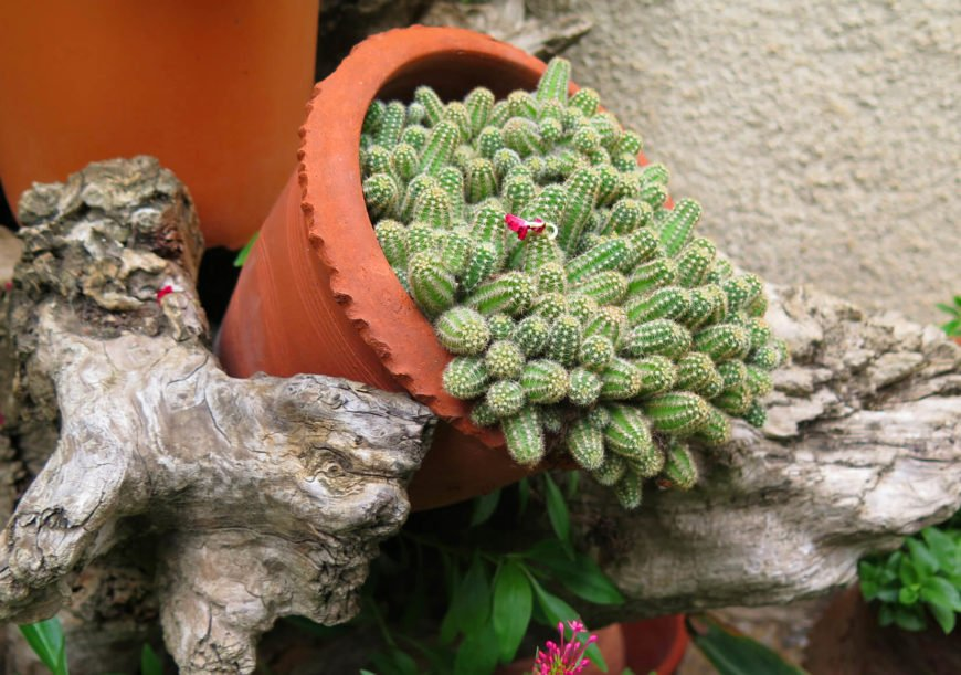 If you are looking for just an accent to your garden and don't want to dedicate yourself to the cactus lifestyle, even one planter with some cute little guys can bring a fresh and interesting element to your garden.