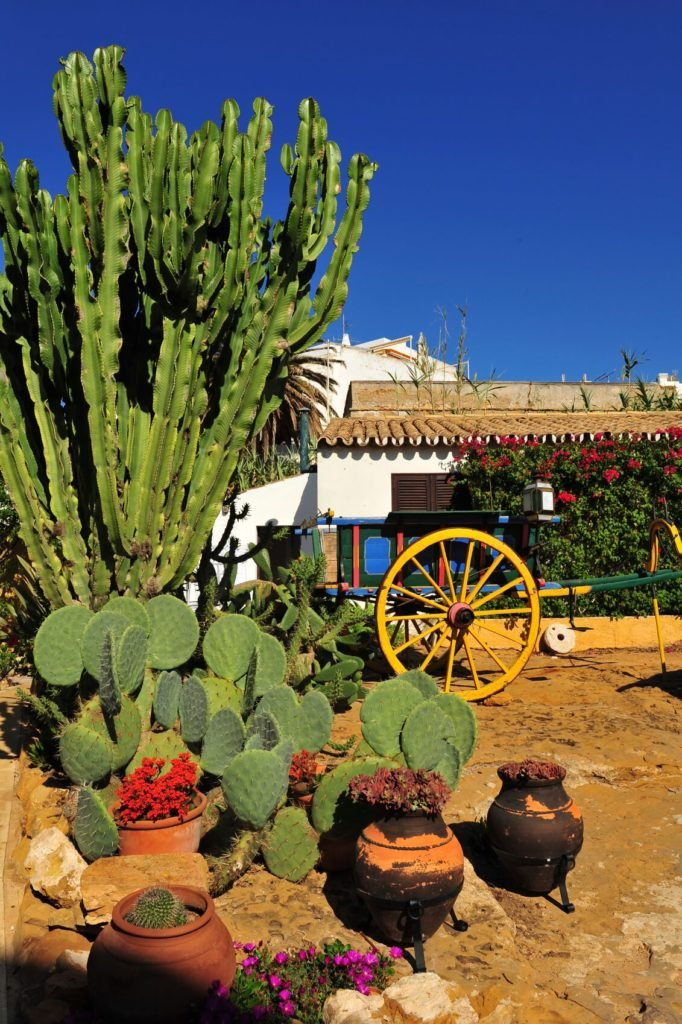 Adding some western elements to your cactus garden can drive home that desert look. A wagon, a wooden well, or some worn pots. Anything distressed, unfinished and old fashioned can conjure images of the American west.